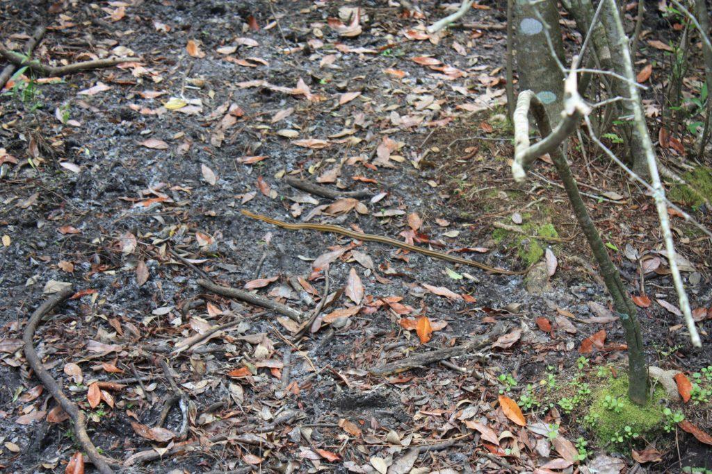 Schlange im Gatorland, Orlando, Florida