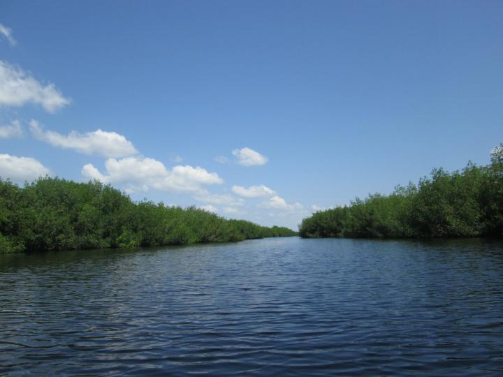 Everglades Area Tours, Kajaktour durch die Everglades