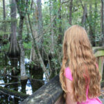 Florida: Shark Valley und die Loop Road durch die Everglades