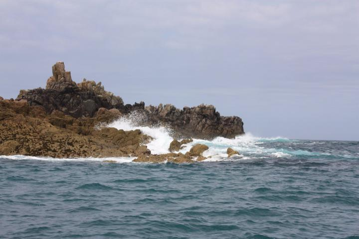 Vogelinsel vor St. Agnes, Isles of Scilly, Cornwall