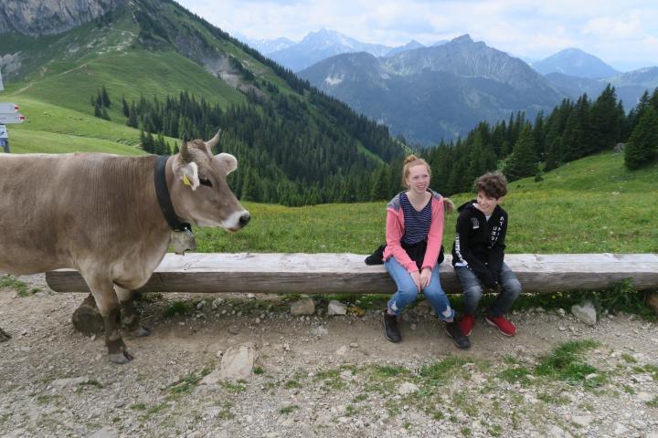 Kuh und Kinder auf dem Breitenberg Pfronten
