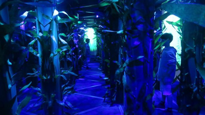 Spiegel-Labyrinth im National Geographic Encounter Ocean Odyssey Time Square
