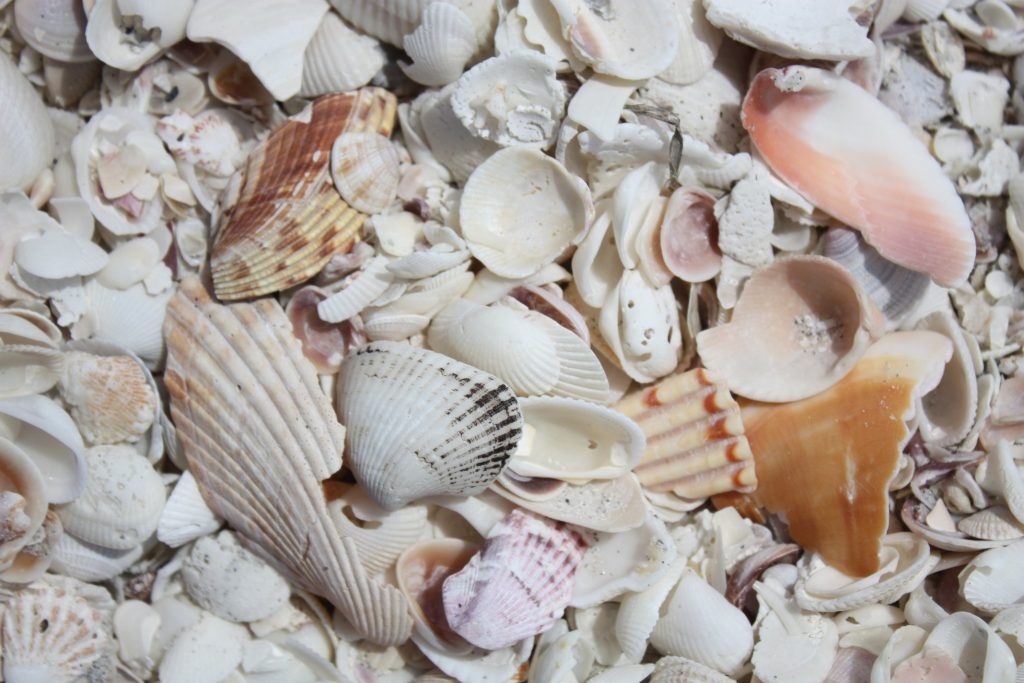 Shell art Sanibel Island