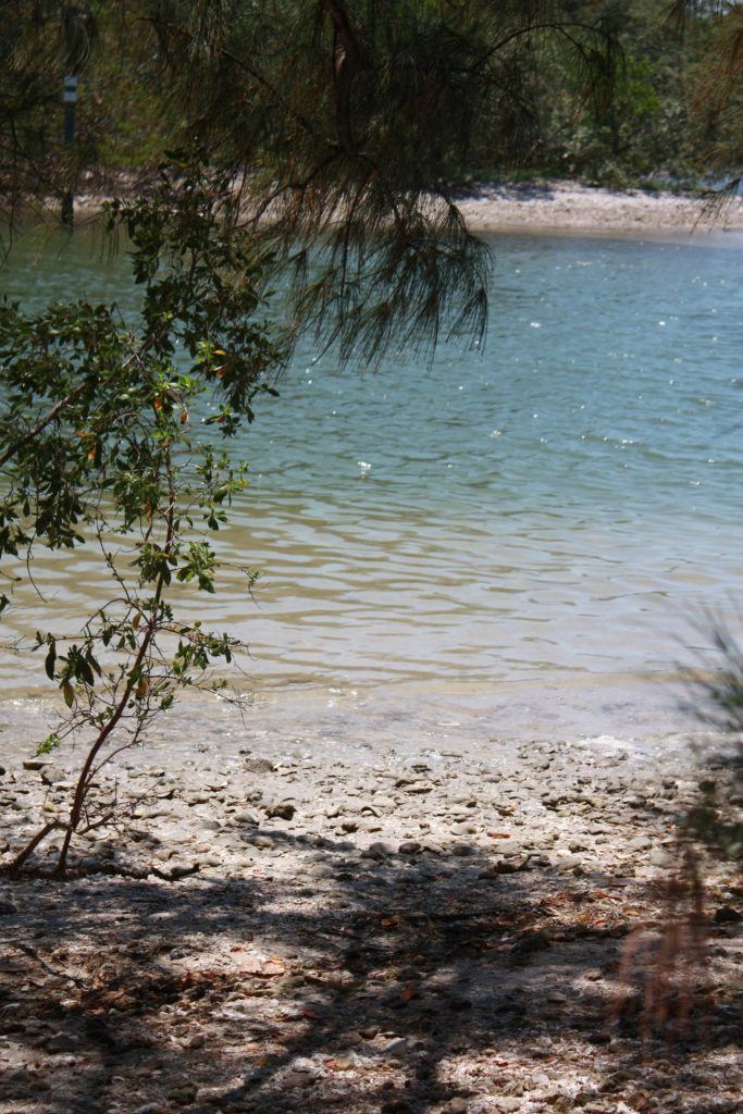 Rast auf einer einsamen und unbewohnten Insel in der Sarasota Bay, Florida